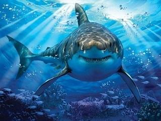 Prime 3D: 10048 Пазл Super 3D «Большая белая акула», 500 детал., 6+